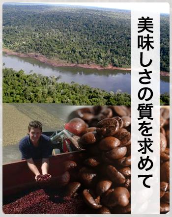 ブラジル農園主品質について