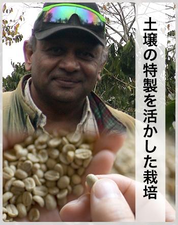 タンザニア農園主土壌を活かした栽培