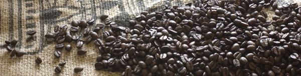 聖珈琲コーヒー豆の選び方