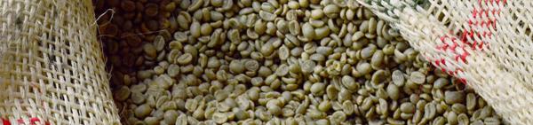 聖珈琲コーヒー豆の保存生豆